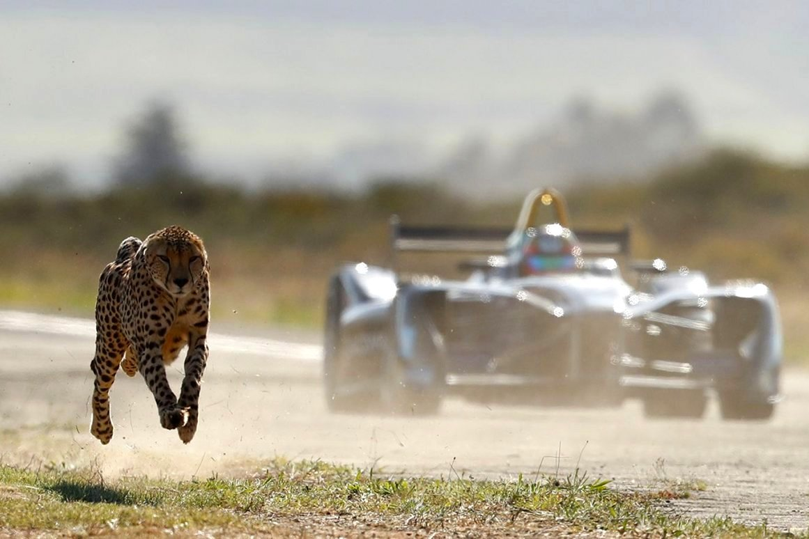 Racing with Cheetah